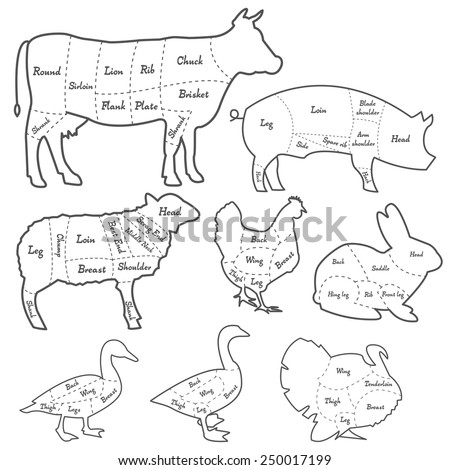 meat diagram stock images  royalty