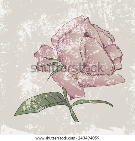 Vintage Pink Rose Grunge Abstract Background - stock vector