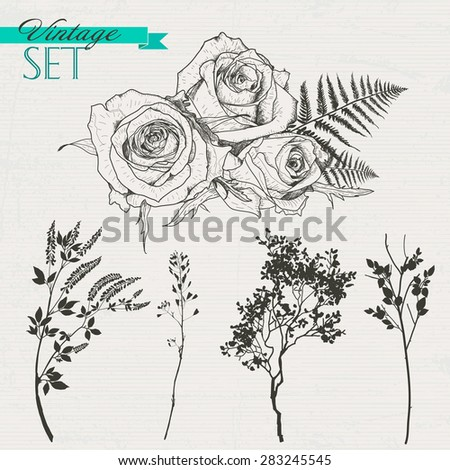 Vintage set of roses, branches and grass - stock vector