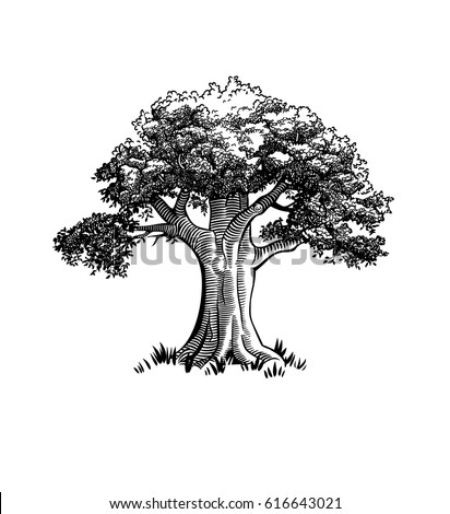 Vintage tree illustration stock vector 616643021 shutterstock vintage tree illustration altavistaventures Image collections