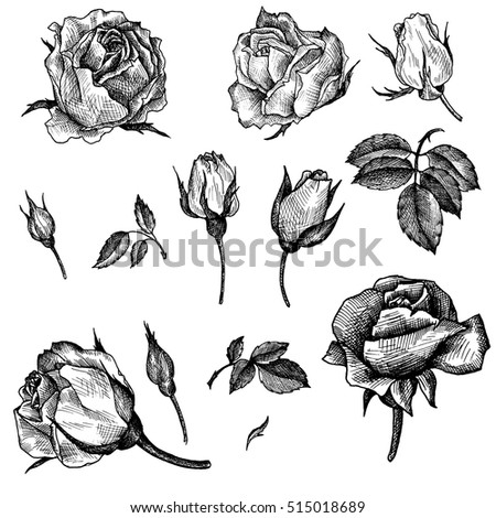 Rose Engraving Stock Images Royalty Free Images Amp Vectors