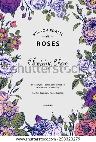 Vintage vector frame. Garden and wild roses. In the style of an old botanical illustration. Colorful. - stock vector