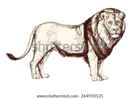Vintage vector illustration: drawing of a standing lion  - stock vector