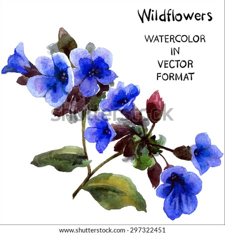 Violets. Watercolor hand painting flower in vector format. - stock vector