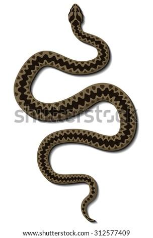 Viper snake vector - stock vector