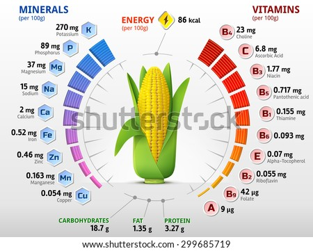Vitamins and minerals of corn cob. Infographics about nutrients in ear of maize. Qualitative vector illustration about corn, vitamins, vegetables, health food, nutrients, diet, etc - stock vector