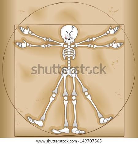 Vitruvian Man Skeleton Cartoon  - stock vector