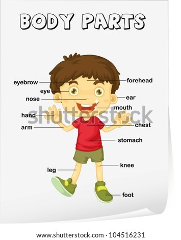 Parts of the body Stock Photos, Images, & Pictures | Shutterstock
