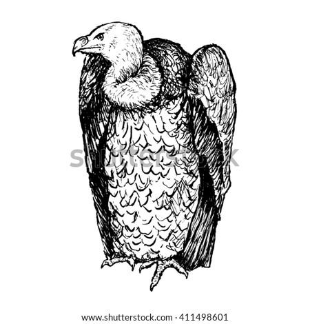 vulture hand drawn vector sketch - stock vector