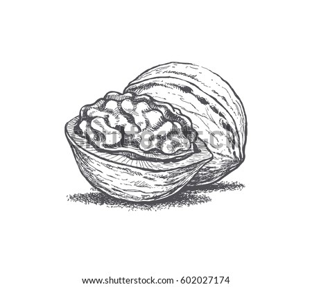 Walnut Illustration Hands Retro Style Vector 602027174 on Healthy Food Coloring Pages For Kids