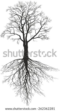 Walnut tree with roots - stock vector
