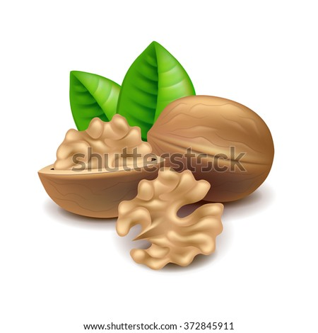 Walnuts isolated on white photo-realistic vector illustration - stock vector