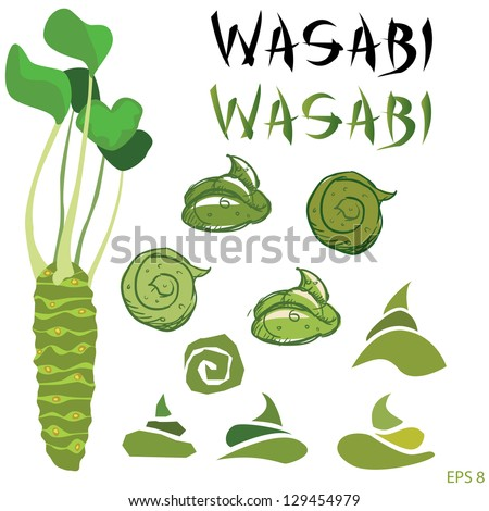 Wasabi root or plant set vector - stock vector