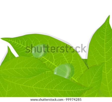 Water drops on green leaves background vector - stock vector