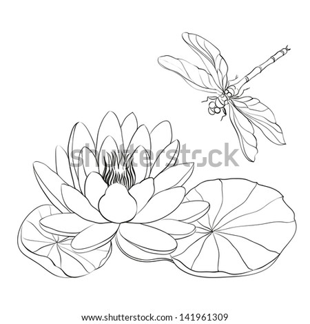 Water Lily and dragonfly isolated over white. Vector illustration. - stock vector