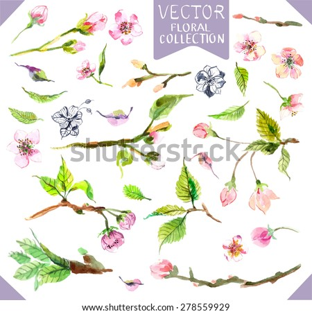 Watercolor apple flowers, beautiful collection for design - stock vector