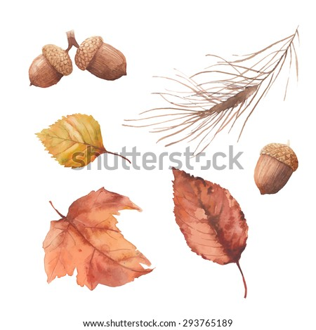 Watercolor autumn nature set. Hand drawn yellow and orange tree leaves, acorn, pine needles branch isolated on white background. Vector season illustrations - stock vector