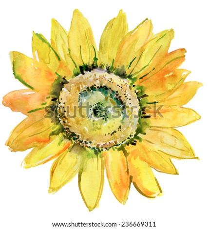 Watercolor background -Sunflower-. Vector - stock vector