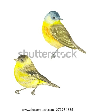 Watercolor birds Western Yellow Wagtail (Motacilla flava) and Siskin (Carduelis spinus), vector illustration. - stock vector