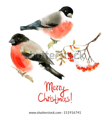 Watercolor bullfinch and ash berry. Vector illustrations - stock vector