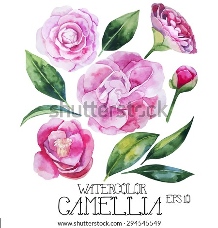 Watercolor camellia set. Vector design elements isolated on white background - stock vector