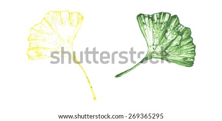 Watercolor colorful ginkgo leaves set