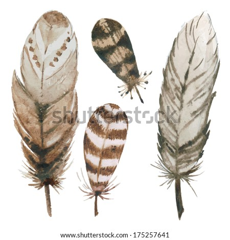 Watercolor feathers - stock vector