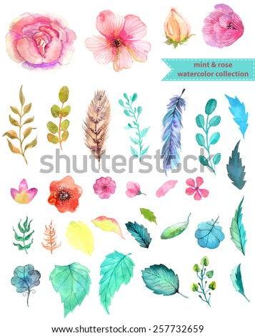 Watercolor floral collection, mint and rose for beautiful design - stock vector