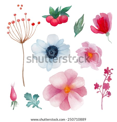 Watercolor flowers elements set. Vintage leaves, anemone, berries, branches. Vector hand drawn design illustration - stock vector