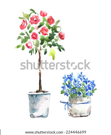 Watercolor. Flowers in pot.