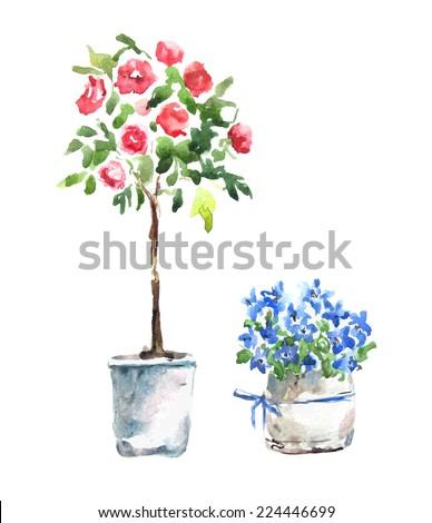 Watercolor. Flowers in pot.  - stock vector