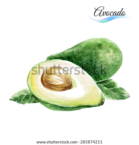 Watercolor fruit avocado isolated on white background - stock vector