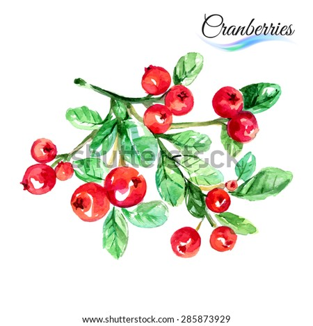 Watercolor fruit cranberries isolated on white background - stock vector