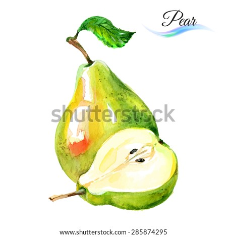 Watercolor fruit pears isolated on white background - stock vector