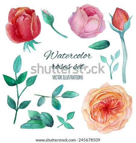 Watercolor garden roses elements set. Vintage leaves, english roses, branches. Vector hand drawn design illustration - stock vector