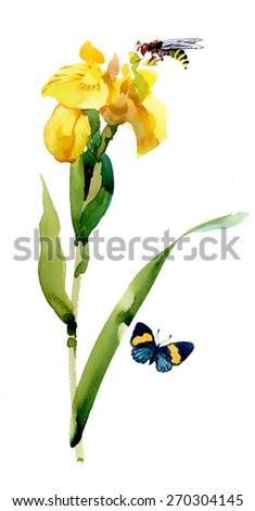 Watercolor garden yellow flowers with butterfly and bee isolated on white background vector illustration