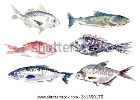 Watercolor hand drawn fishes collection isolated on white background. Vector sea food fish set. Menu cover, journal, magazine, recipe book article. - stock vector