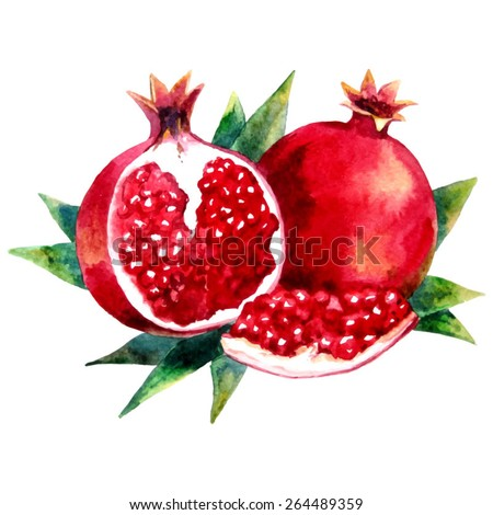 Watercolor hand drawn garnet. Vector fruit icon isolated on white background. - stock vector