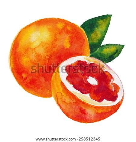 Watercolor hand drawn grapefruit. Vector fruit icon isolated on white background. - stock vector