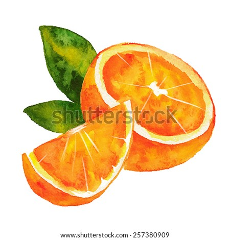 Watercolor hand drawn orange. Vector fruit icon isolated on white background. - stock vector