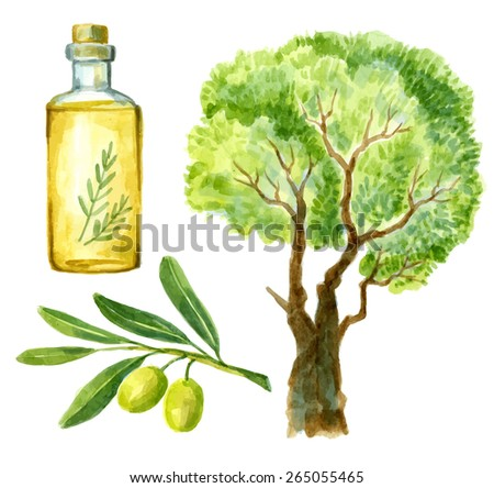 watercolor hand drawn picture of olive and tree - stock vector