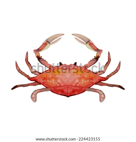 Watercolor hand painted crab. Vector illustration - stock vector