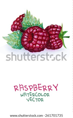 Watercolor healthy life collection: Raspberry. Isolated on white.Vector version - stock vector