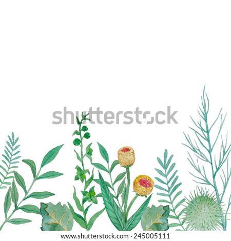 Watercolor herbal elements background. Hand drawn flowers and plants illustration isolated on white background. Vector objects frame - stock vector