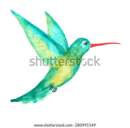 watercolor hummingbird on white - stock vector