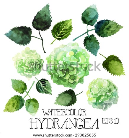 Watercolor hydrangea set. Vector design elements isolated on white background - stock vector