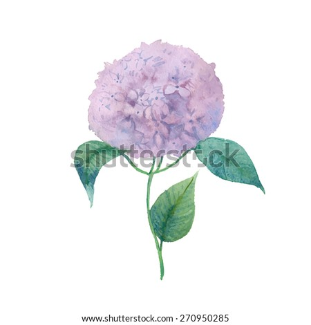 Watercolor hydrangea. Single purple flower with leaves hand drawn. Vector botany illustration - stock vector