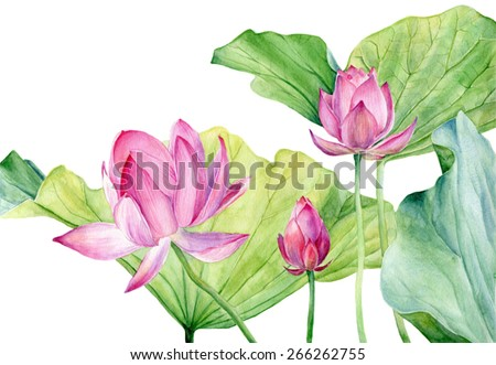 Watercolor Illustration Lotus. Vector. - stock vector