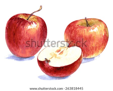 Watercolor illustration of cut and whole red apples Vector isolated on the white background - stock vector