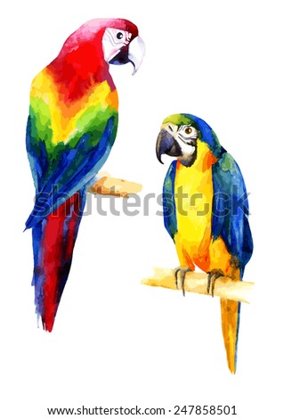 Watercolor illustration of two parrots - stock vector
